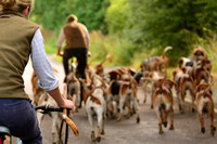 Woodland Pytchley Hounds 027