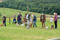 The Woodland & Pytchley Lurcher and Terrier Show 2017 006