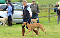 The Woodland & Pytchley Lurcher and Terrier Show 2017 013