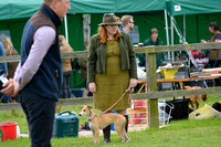 The Woodland & Pytchley Lurcher and Terrier Show 2017 012