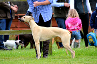 The Woodland & Pytchley Lurcher and Terrier Show 2017 018