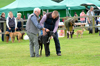 The Woodland & Pytchley Lurcher and Terrier Show 2017 024