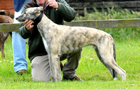 The Woodland & Pytchley Lurcher and Terrier Show 2017 027