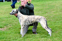 The Woodland & Pytchley Lurcher and Terrier Show 2017 029