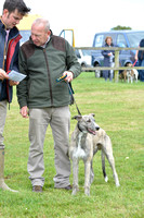 The Woodland & Pytchley Lurcher and Terrier Show 2017 032