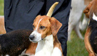 Joint Meet of The Oxford University Beagles and THe Oakley Foot Beagles at Illston 019